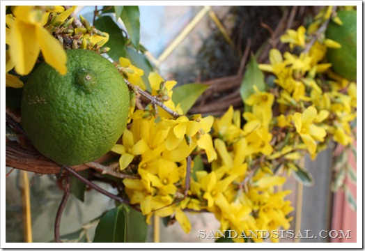 Lime & Forsythia