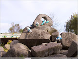 Kletter-Schlümpfe