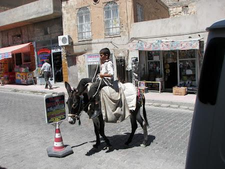 calare pe magar in Kurdistan