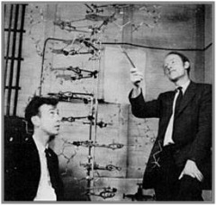 DNA discovered by Watson and Crick
