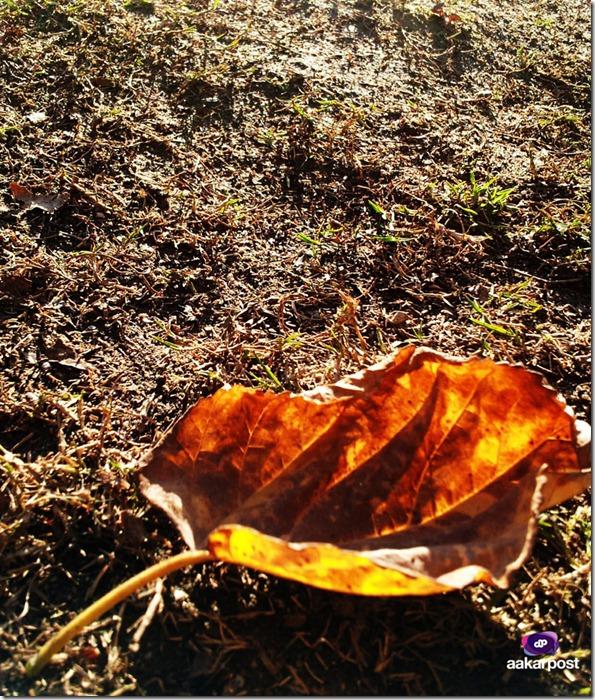 leaves-at-keshar-mahal