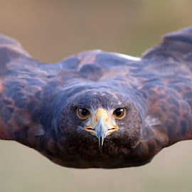 to fly by Stefano Ronchi - Uncategorized All Uncategorized