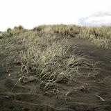 North Island - Piha Beach (the deadliest beach in NZ) with its black sand