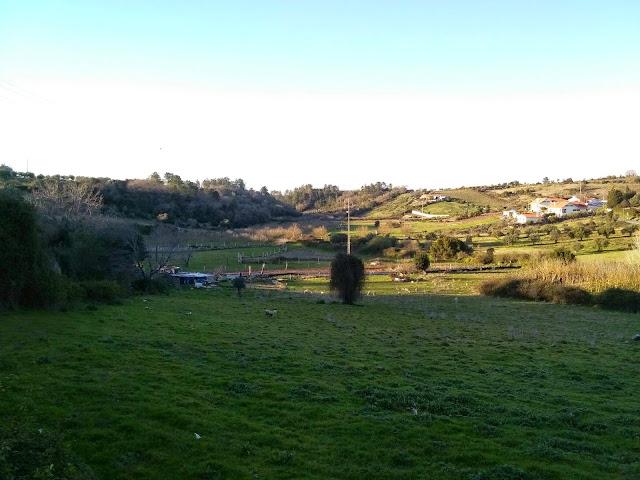 campo verde em Porto de Mós