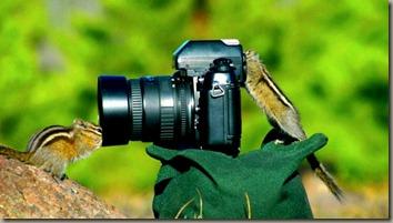 camera-assistants-600x337