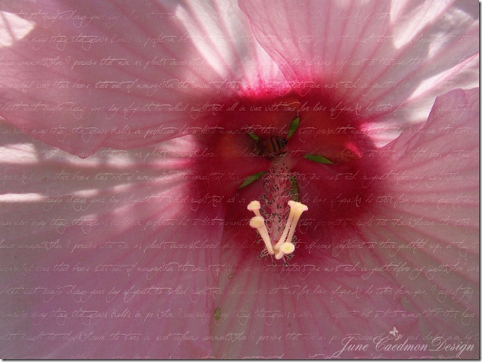 Hibiscus_Bee_Scripted