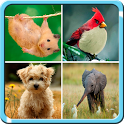 Cute Animal Puzzle Kids Game icon