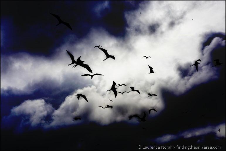 Frigate birds against clouds edit 3
