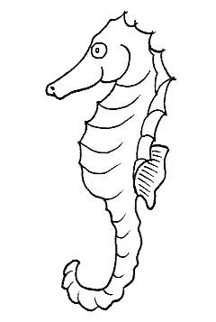 Dibujos Infantiles De Caballitos De Mar Para Colorear