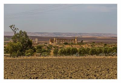 Volubilis - Blick auf die Basilika vom Geocache aus