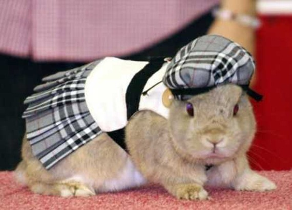 rabbit-fashion