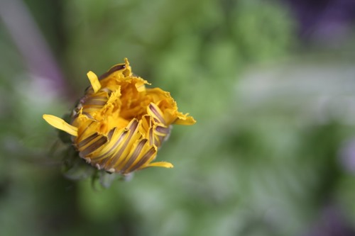 20120612a (Large)