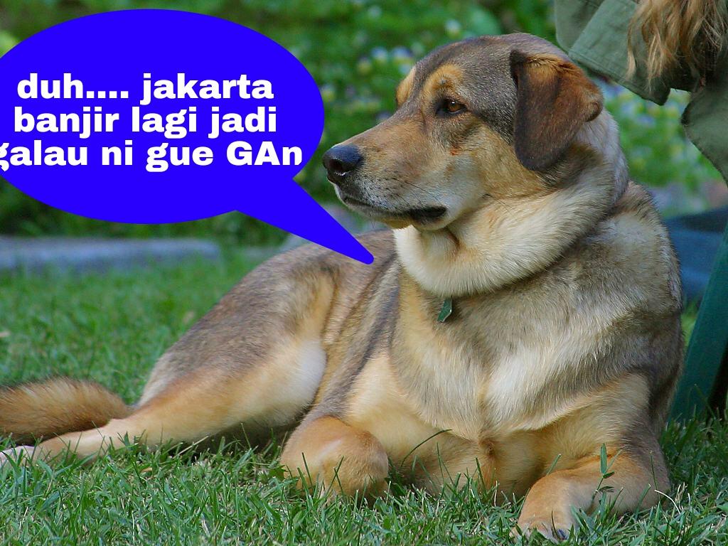 Gambar Dan Kata Kata Lucu Anjing Stok Gambar Lucu