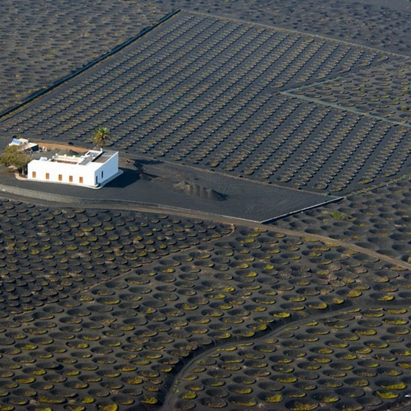 Peculiar Vineyards of Lanzarote, Spain