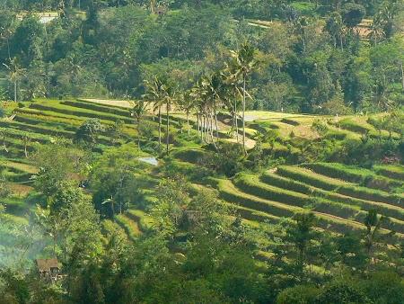 Orezarii Bali