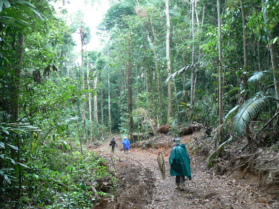 Dans la forêt près de Crique Tortue, à l'ouest de Saut Athanase (Guyane), 22 novembre 2011. Photo : C. Renoton