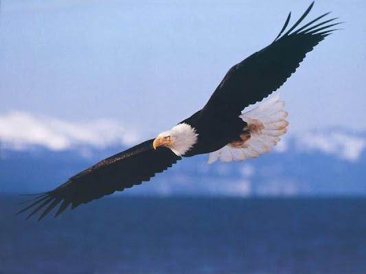 Eagles Wallpapers - screenshot
