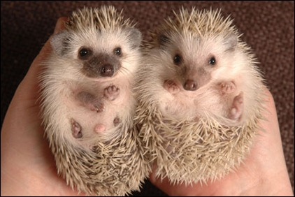 HedgehogBNPS_450x300