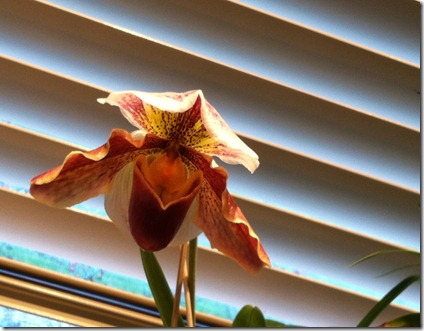 orchid 041112