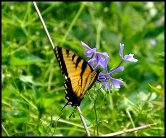 05 - Spring Wildflowers and Butterflies 2