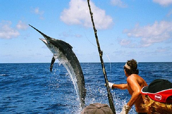 Những kỹ thuật câu cá biển căn bản cho người đi đâu