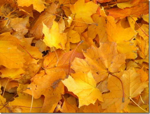 fall_leaf_stock_by_minotaur_queen-d32m8wx