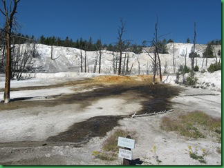 Mammoth Hot Springs Terraces (85)