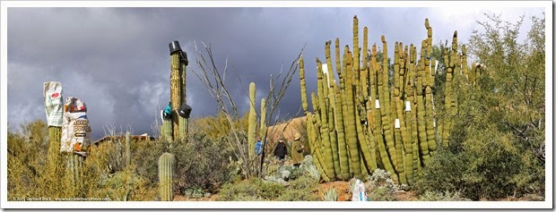 150101_ASDM_pano_cactus_protection