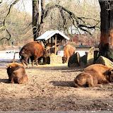 Tierparkbesuch im Februar (2015)
