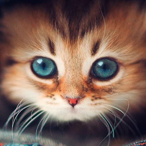 我的寵物 個人化 App LOGO-APP開箱王