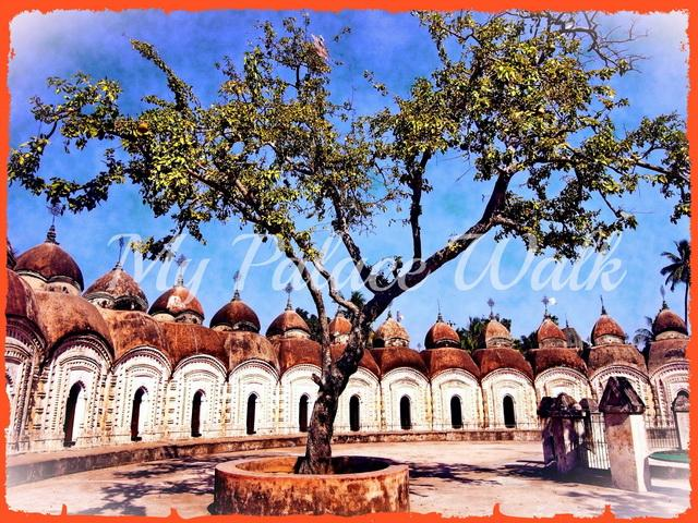 Sacred tree dominates courtyard at Rajbari Tempes, Kalna, West Bengal