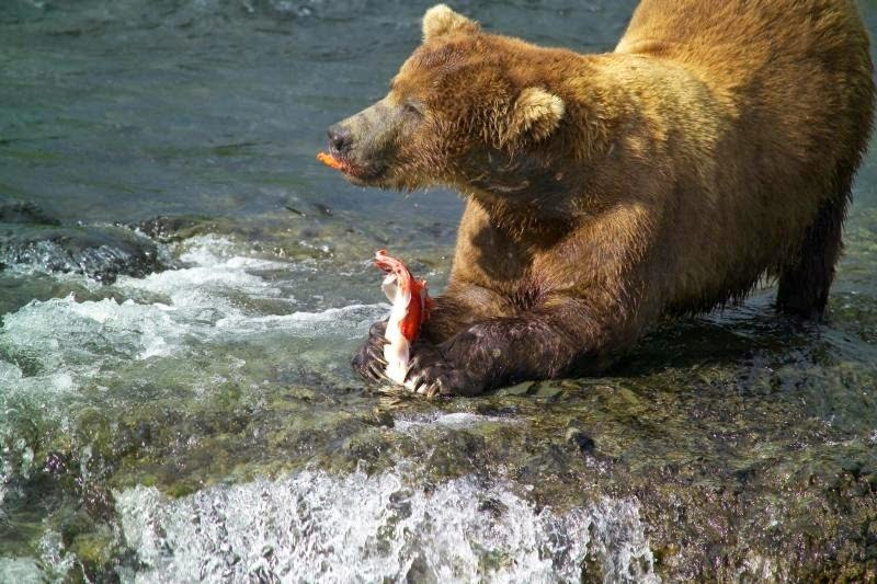 brooks-falls-bears-12