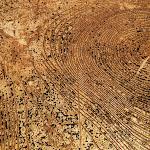 stumps-sharon-sides-07.jpg