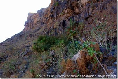 6695 Carrizal Tejeda-La Aldea(Fuente de la Pila)