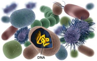диагностика и лечение дислипидемии у больных метаболическим
