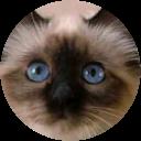 Catlady Melli