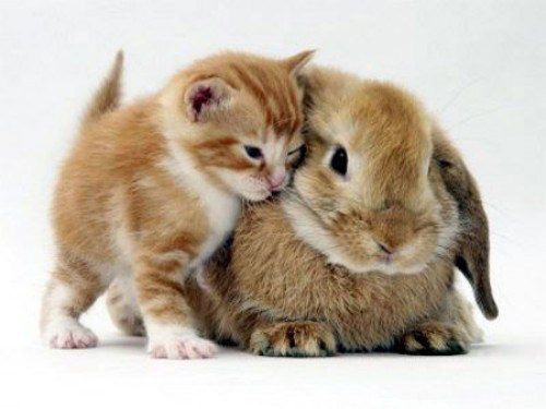 love is healing everything, time to love the animals, furry little animals, donate non profit
