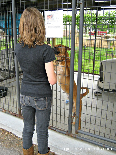 dog at animal shelter