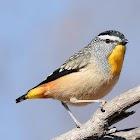 Australian Birds Sounds icon