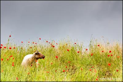 Lac et moutons-5.jpg