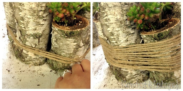 Twine-wrapped Birch Logs with Succulents planted in them! {Sawdust and Embryos}