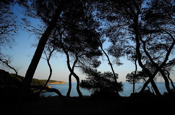 El bosc de la Marquesa, punta de la Creueta, espai natural protegit, extrem nord de la platja Llarga, al fons, la torre de la Mora, Tarragona, Tarragonès, Tarragona