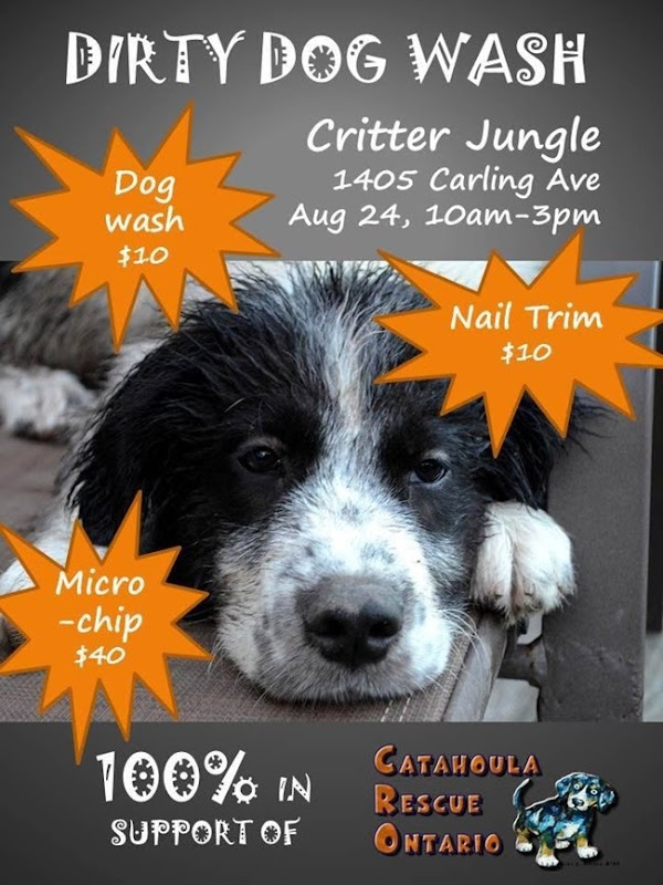 dirty dog grooming catahoula rescue ontario august 2013 30855
