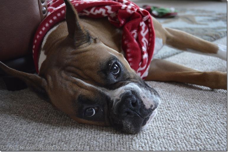 Red DIY Dog christmas sweater