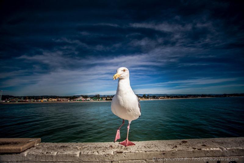 gull beach california
