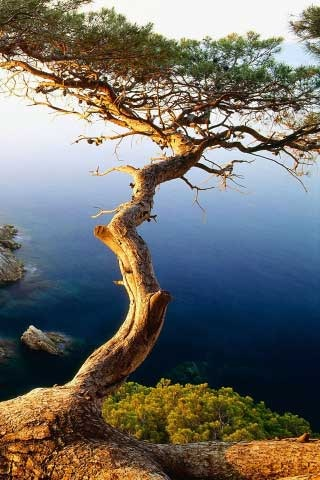 50 Wallpapers de naturaleza para iPhone 4s