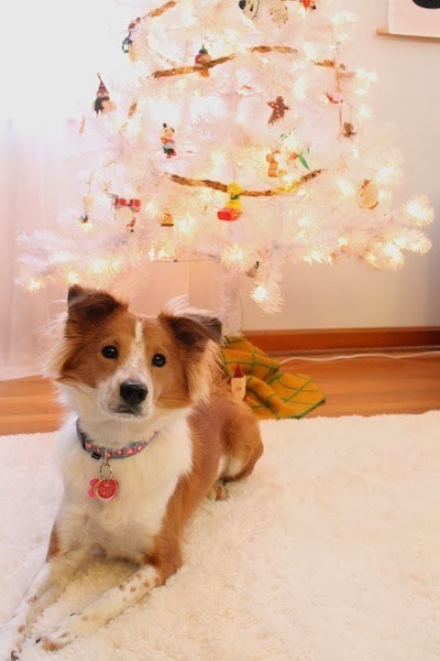 rental revival christmas tree with petunia the dog