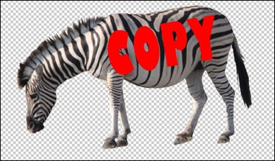 Zebra-Orig
