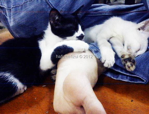 kucing tidur atas kaki