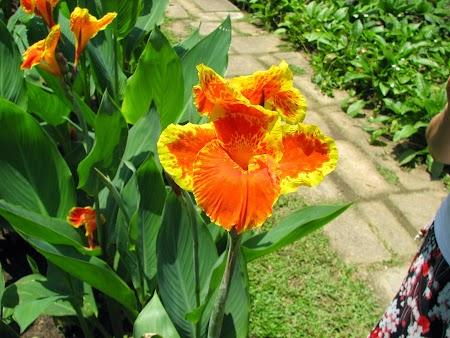 06. Gradina Botanica.JPG